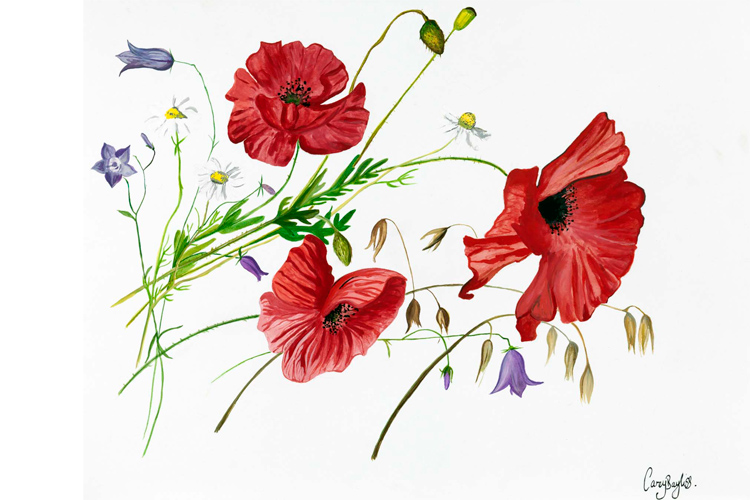 Large poppies watercolour