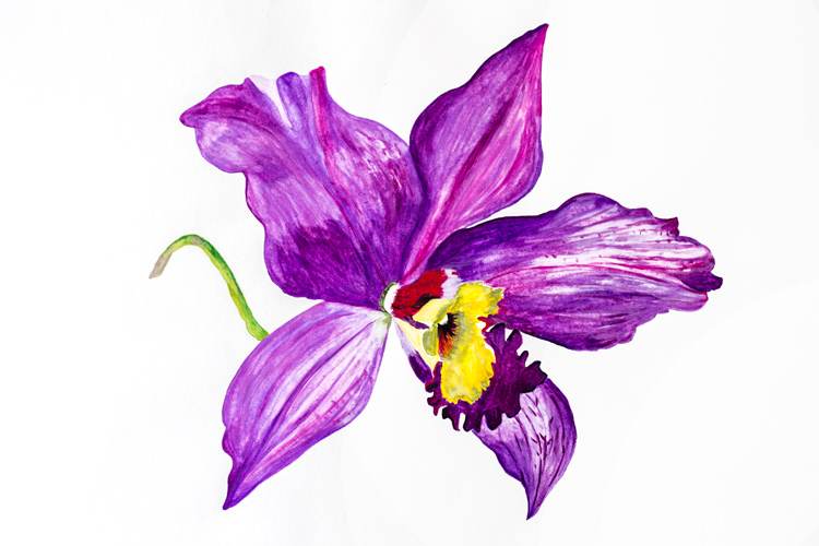 Large orchid floral watercolour