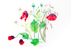 Floral watercolour greetings card